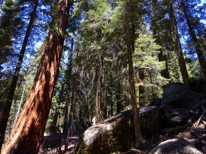 Trail of the Sequoias 3