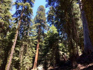 Trail of the Sequoias 4