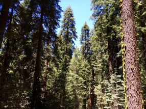 Trail of the Sequoias 5