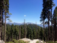 Trail of the Sequoias 12