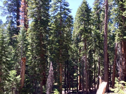 Trail of the Sequoias 14