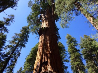 Trail of the Sequoias 16