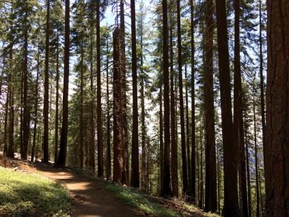 Moro Rock Trail 2