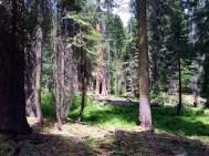 Moro Rock Trail 6