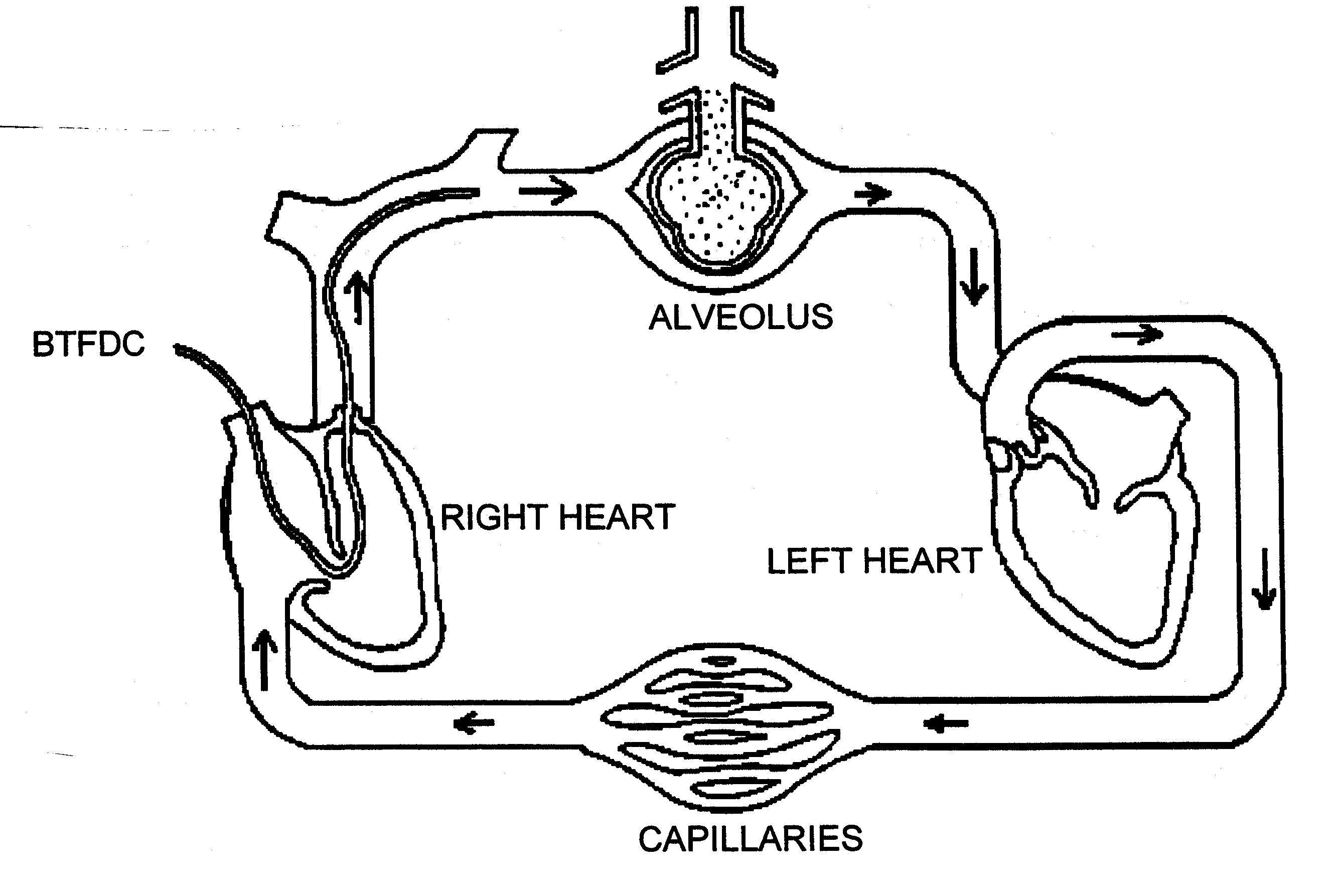 Module E Circulatory System Diagram
