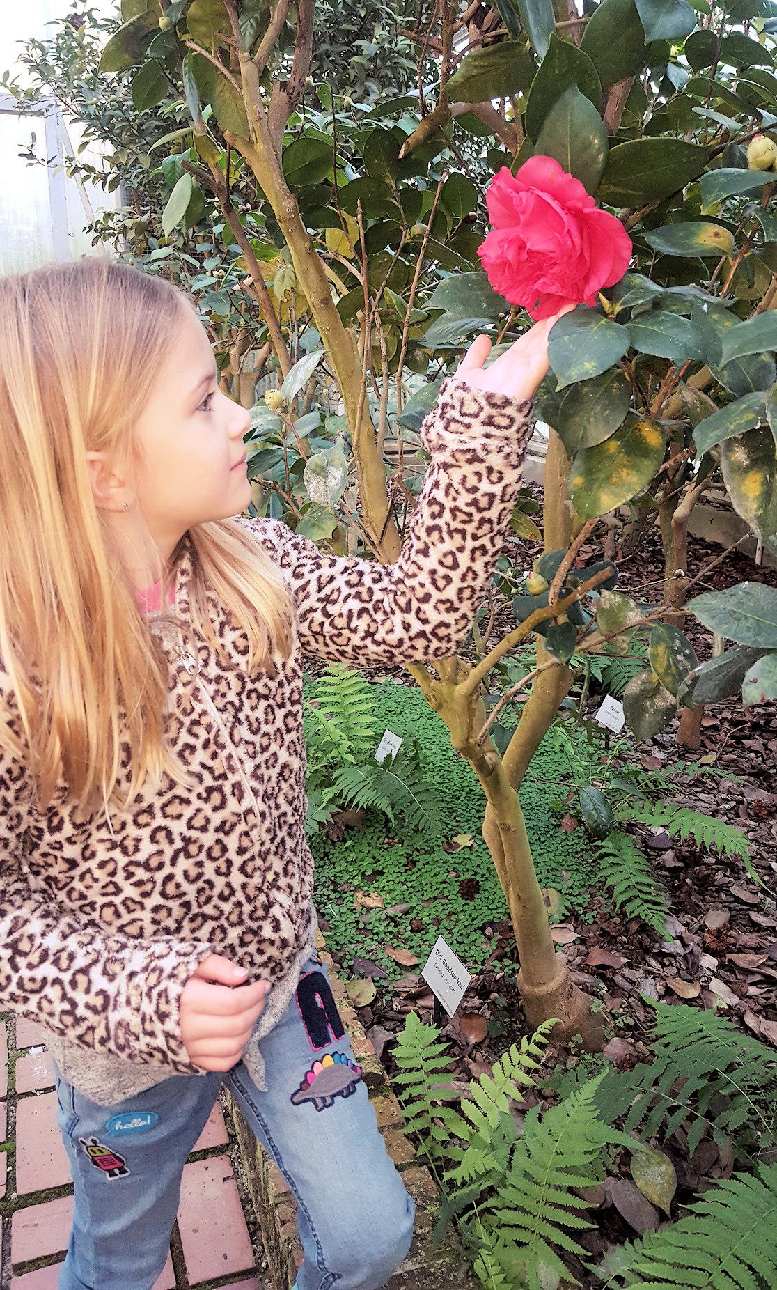 Isobel Deal - Massee Gardens