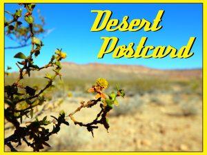 desert-postcard
