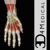 Hand Wrist Pro III with Animations