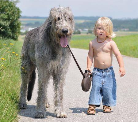 19269753_cute_big_dogs_10.limghandler