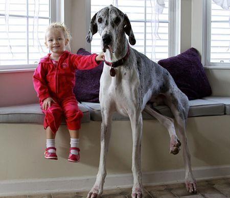 19269756_cute_big_dogs_11.limghandler