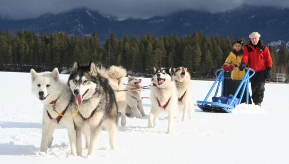 dog_sledding_3
