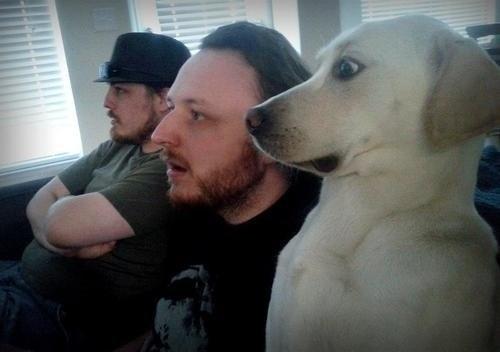 The-Shocked-Dog-Lab