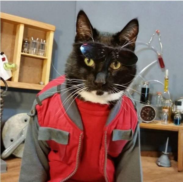 cat-cosplay-blog-0