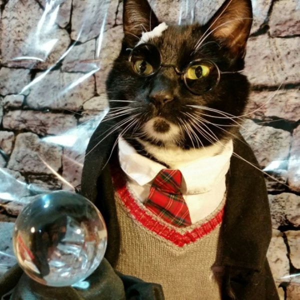 cat-cosplay-blog-4