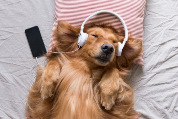Relax My Dog Music
