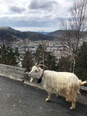 There were goats everywhere!