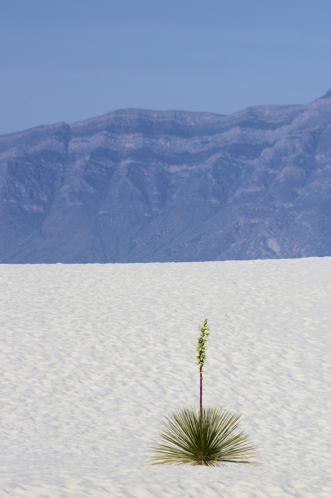 White Sands National Monument in Otero County, New Mexico. Eco-Tourism is a significant portion of Southern New Mexico's economy