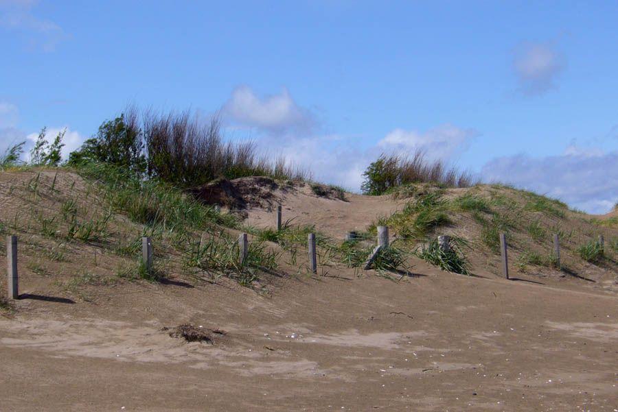 Saint Andrews dunes