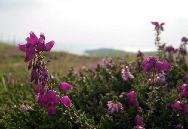 Flowers in Handa
