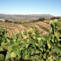 Finca del Mas Blanc, DO Priorat