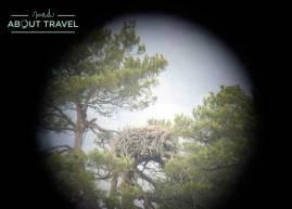 Observación de aves en el Loch of the Lowes