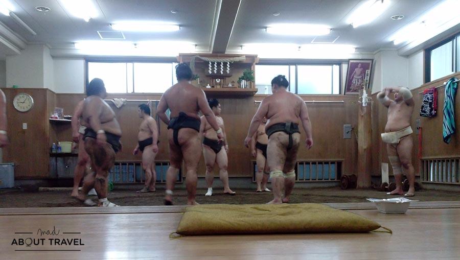 Entreno de Sumo en Tomozuna Beya © Walter Valderrama