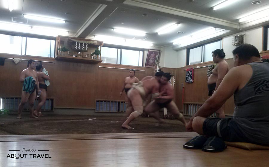 Entreno de sumo en la escuela de sumo Tomozuna Beya