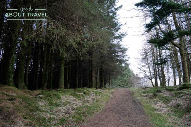 Bosque de Blackwaterfoot en la isla de Arran