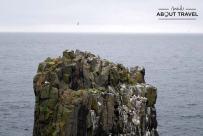 senderismo en la Isla de May en Escocia