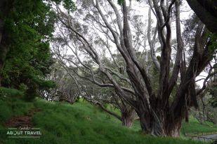 Vistas de Auckland desde Mount Eden