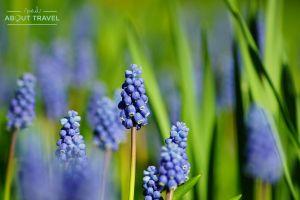 flores en el jardín de inveresk lodge, a las afueras de edimburgo