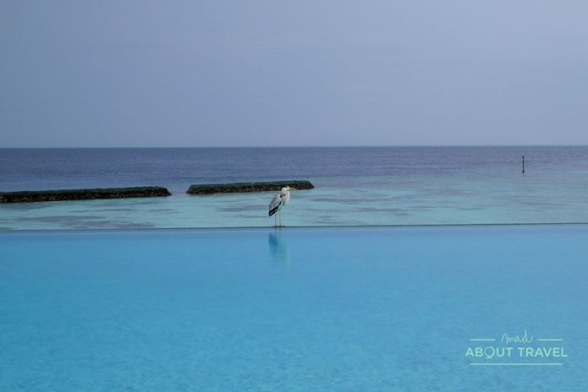 playa del resort de maldivas coco bodu Hithi