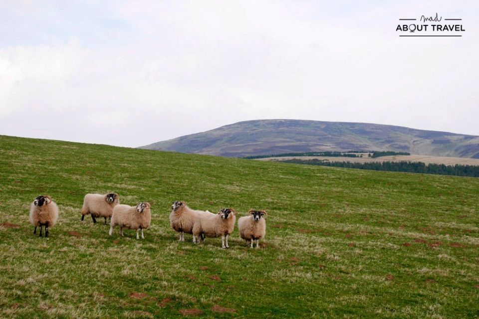 senderismo en escocia lammermuir hills