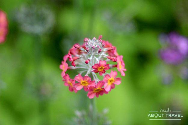 que ver en edimburgo: jardín botánico