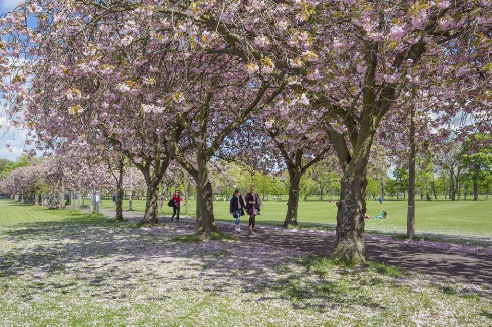que hacer en Edimburgo gratis: parque meadows