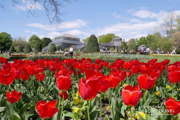 que ver en glasgow gratis: jardín botánico