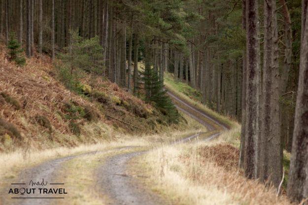bosque de cardrona, borders escocia