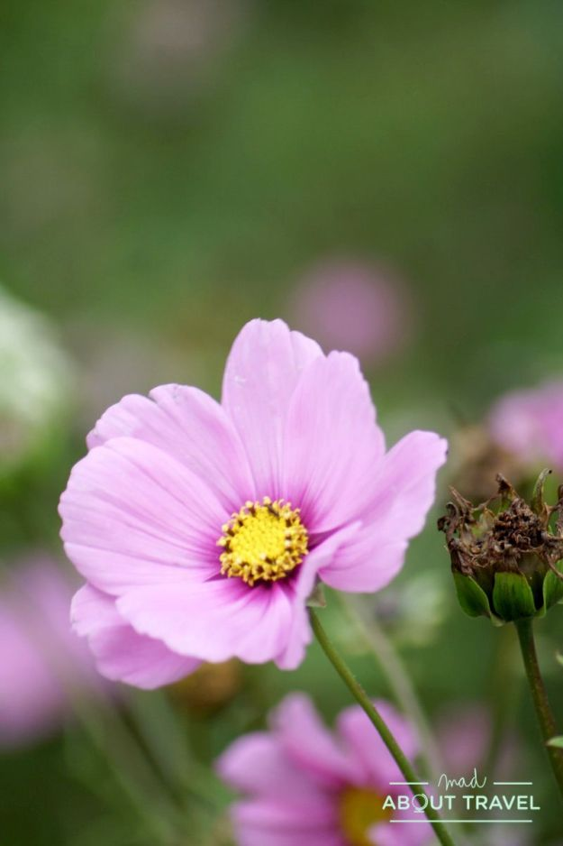 Jardines de Inverewe, Escocia