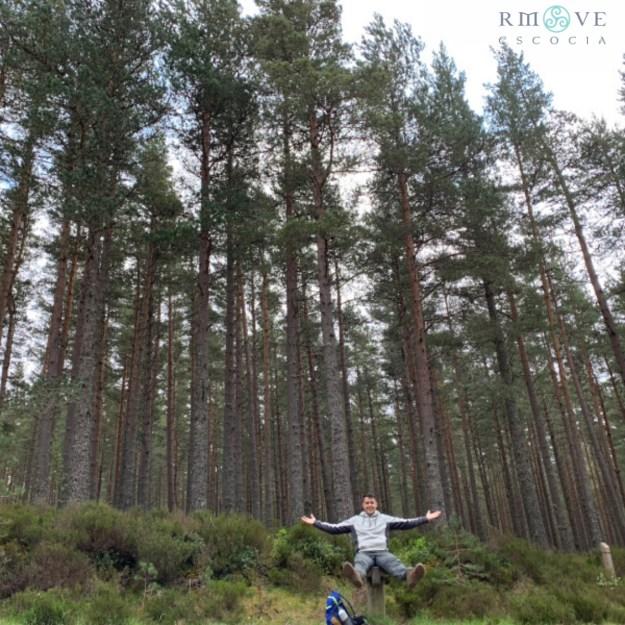 Bosque de pino caledonio en Parque Nacional de Cairngorms