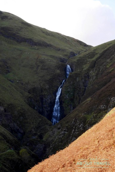 grey-mares-tail-03