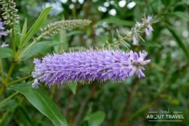logan-botanic-garden-09