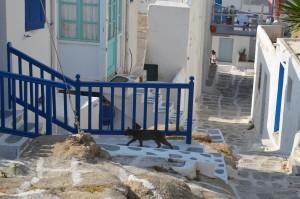 ミコノス島猫