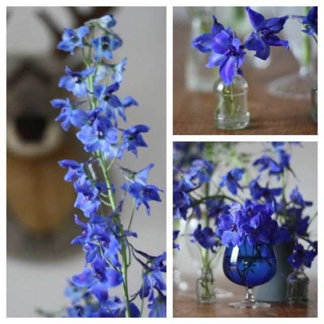 delphinium bouquet (c) madamelove