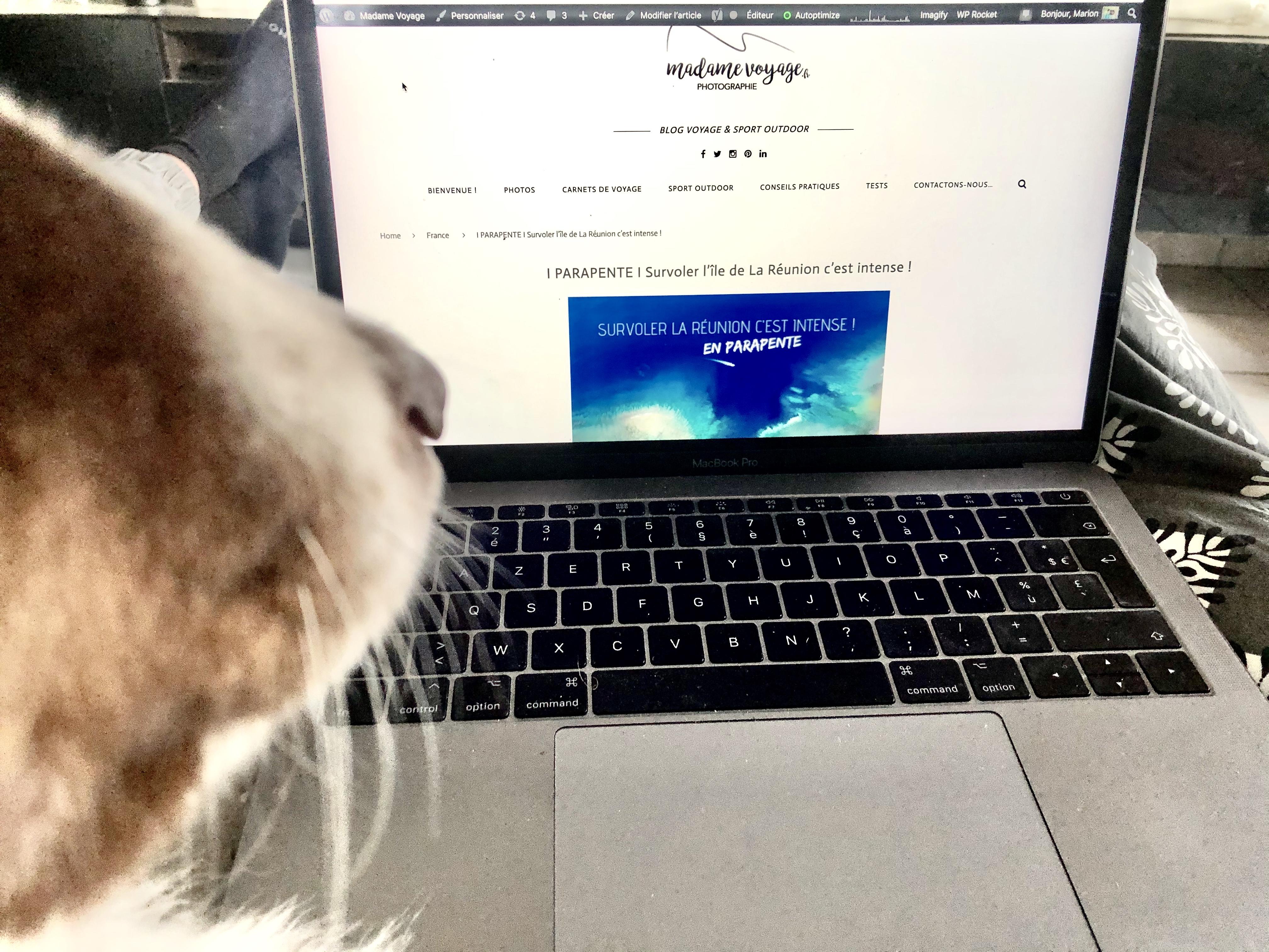 storie instagram blog madame voyage, confinement avec son chien, blog madame voyage
