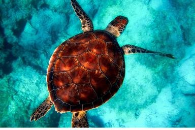plongée sous marine avec Aquabulle sur l'île de La Réunion activités sportives blog madame voyage