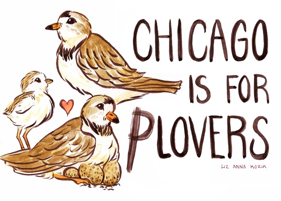 Chicago is for Plovers