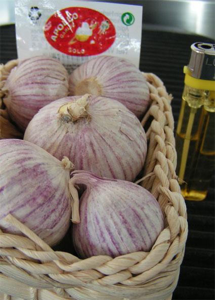 apollo-garlic-1.jpg
