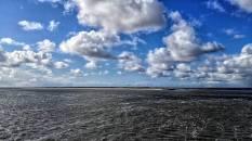 Texel 2016 (14)