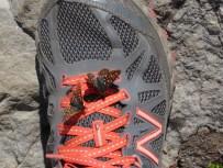Butterflies on My Shoe