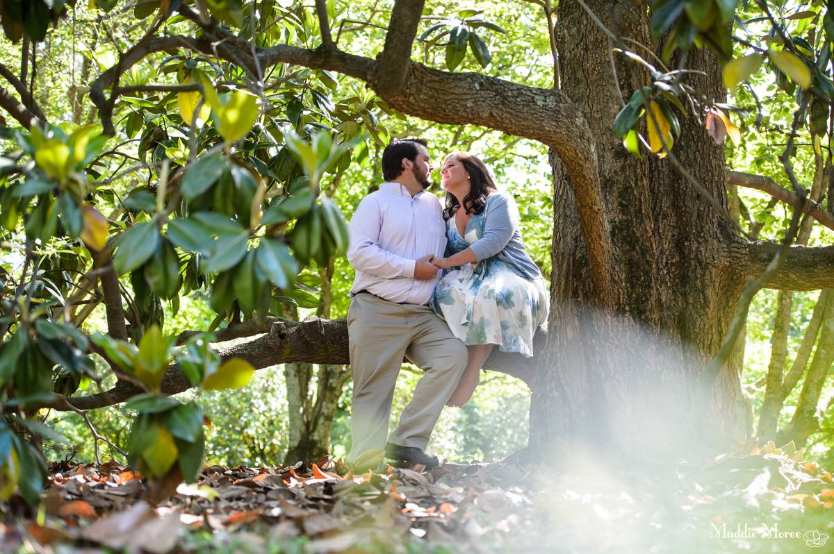 Magnolia trees Botanic